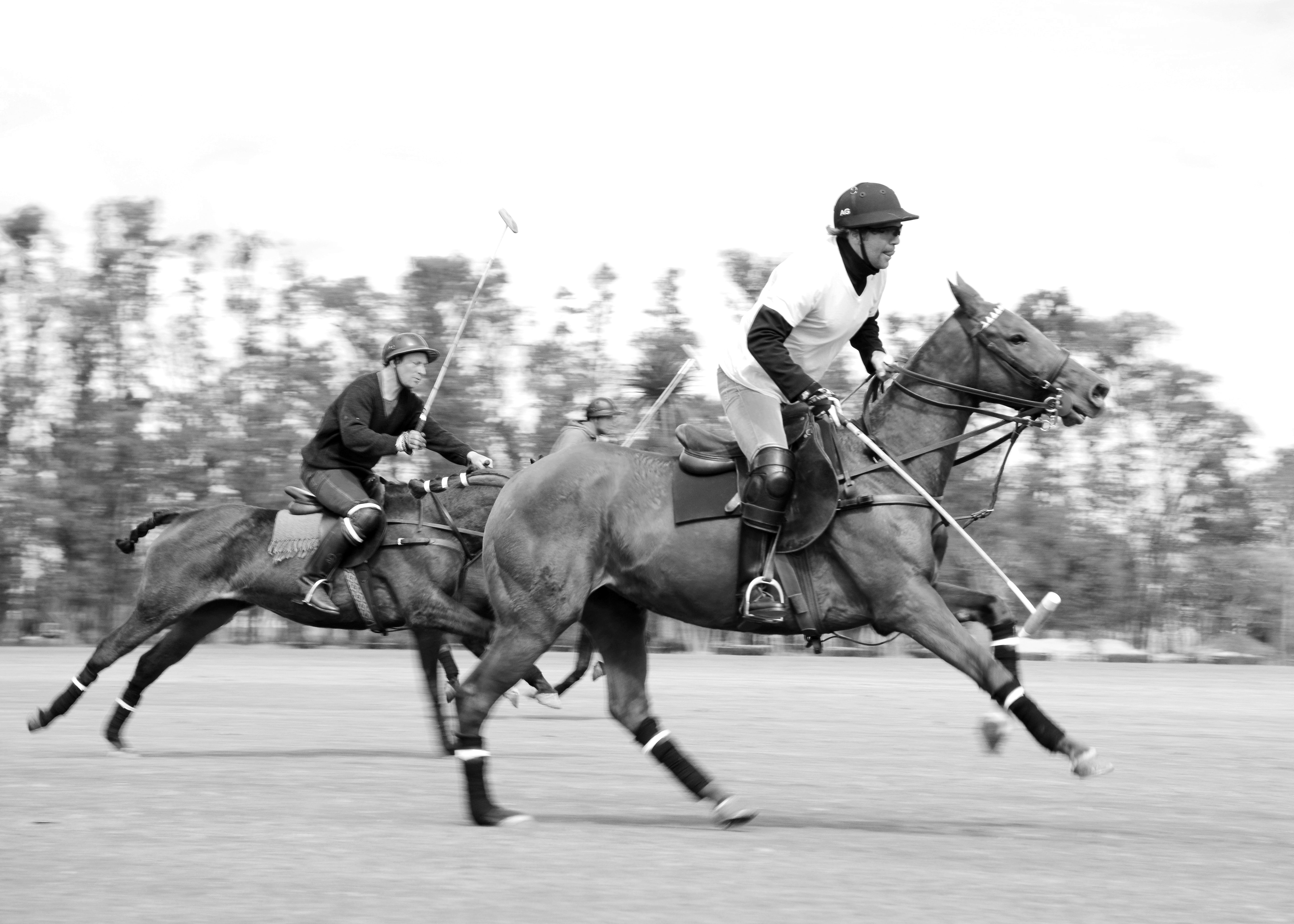 Lifestyle Equities v Greenwich Polo Club